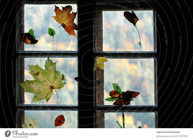 Leaf Colour Autumn Window Decoration Living or residing Seasons Living room Window pane