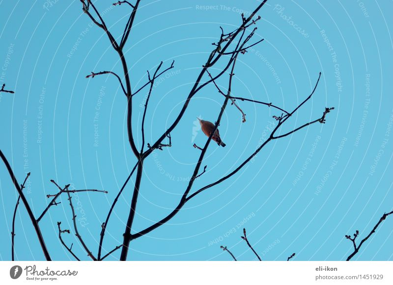 From below Nature Animal Air Sky Cloudless sky Winter Tree Bird 1 Observe Above Blue Wanderlust Calm Illustration Back-light Structures and shapes Colour photo