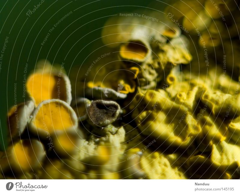 Nature Yellow Background picture Near Obscure Extraterrestrial being Algae Lichen