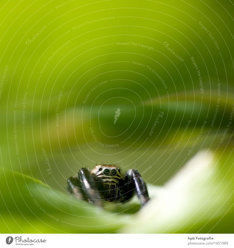 spring spider Environment Nature Garden Park Meadow Forest Animal Wild animal Spider Observe To feed Hunting Crawl Smiling Aggression Threat Cool (slang)