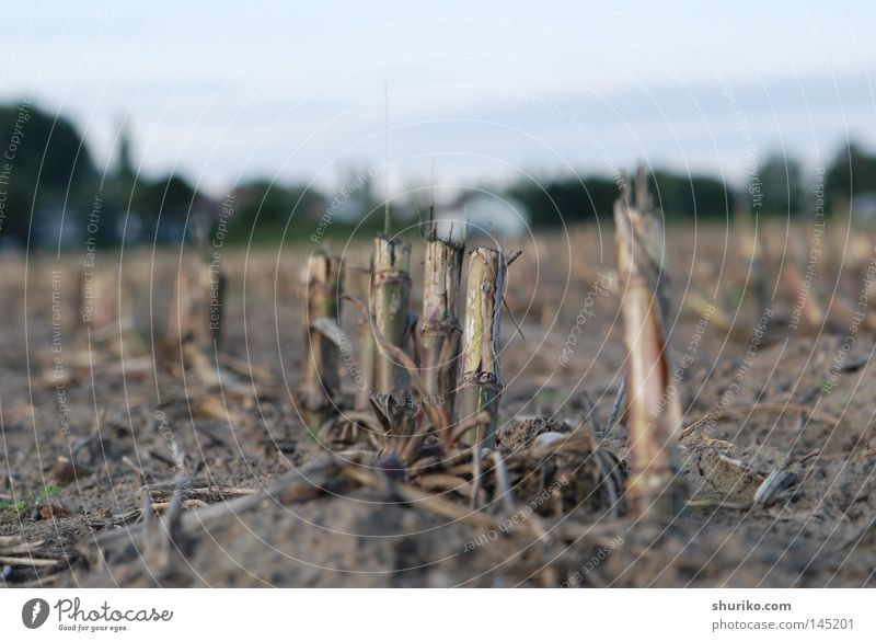 Sky Plant Landscape Autumn Grass Gray Earth Horizon Germany Field Living thing Grain Harvest Baked goods Root