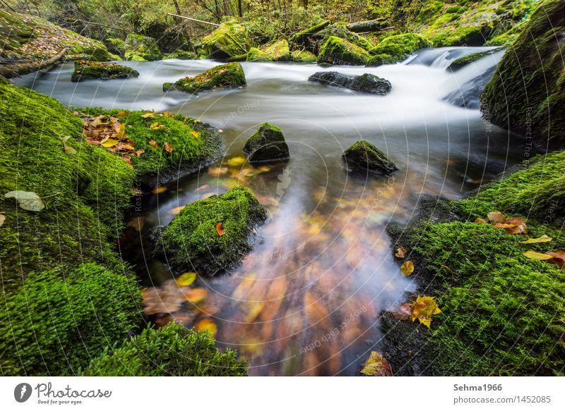 Autumn colours in flow with long exposure Environment Nature Landscape Plant Elements Earth Water Sun Weather Beautiful weather Tree Flower Grass Bushes Moss