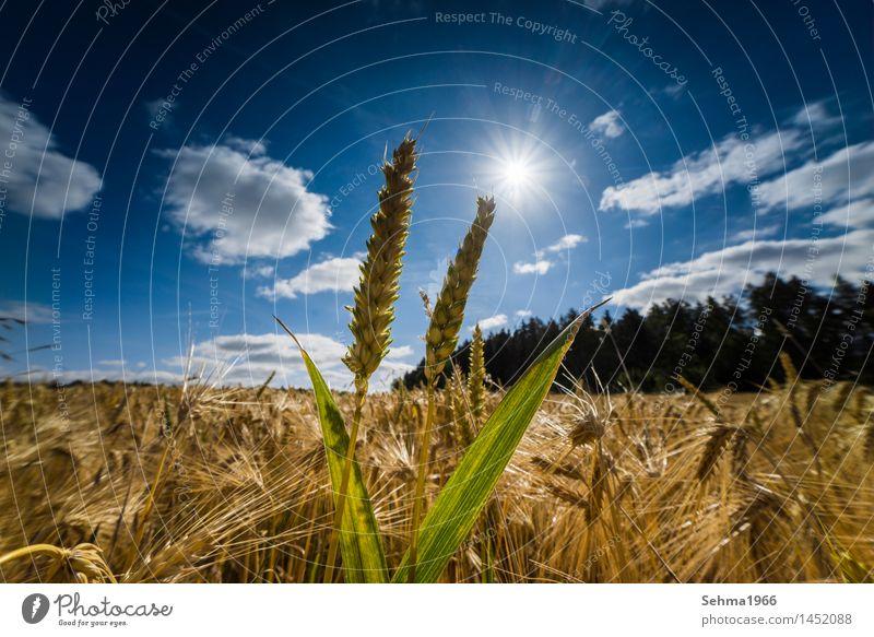 Sky Nature Plant Summer Sun Flower Landscape Clouds Joy Environment Meadow Grass Happy Weather Field Bushes