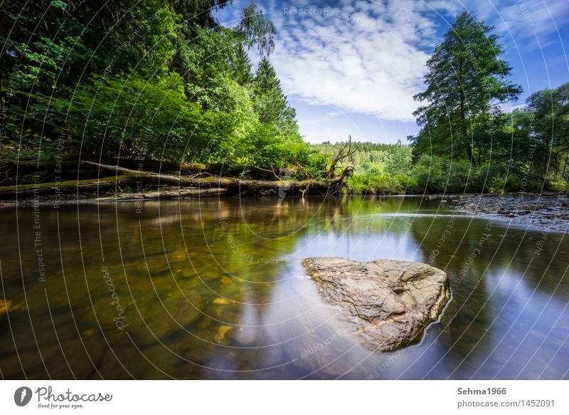 Stones in the river at long exposure and blue sky Nature Landscape Plant Earth Sand Water Sky Clouds Sun Sunlight Summer Autumn Beautiful weather Tree Grass