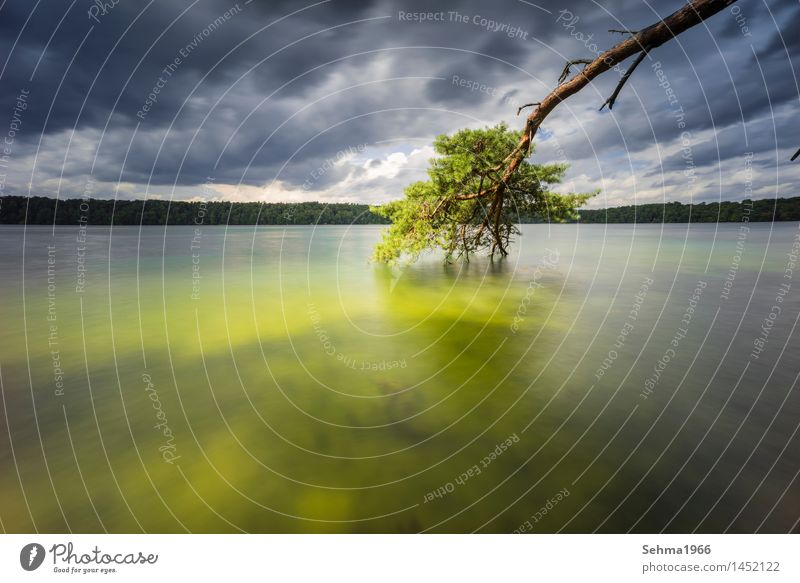 A pine and dark clouds at the lake with long exposure Environment Nature Landscape Plant Sand Water Storm clouds Sunlight Summer Bad weather Wind Gale Tree Moss