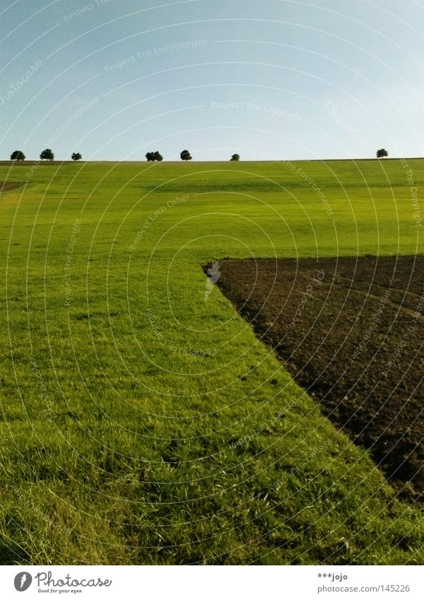 Nature Tree Autumn Meadow Brown Field Earth Agriculture Americas Geometry Furrow Avenue Mud Rural Pampa