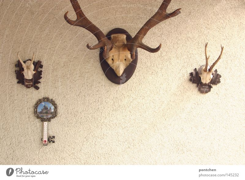 Animal Death Germany Leisure and hobbies Masculine Decoration Kitsch Idyll Possessions Hunting Antlers Nostalgia Real estate Bavaria Tradition Deer