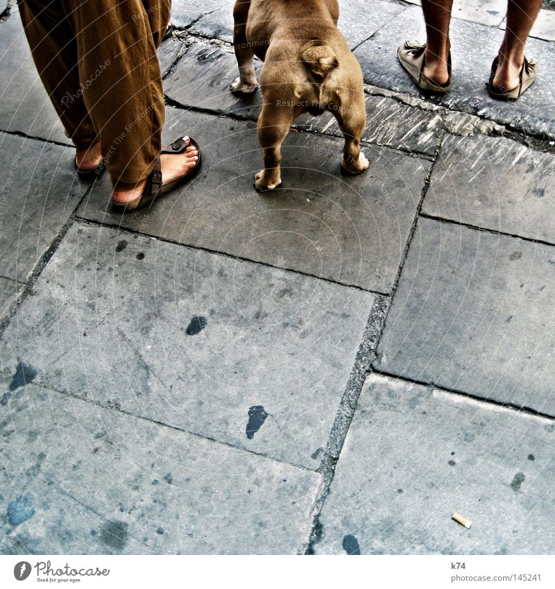 Dog City Street Feet Brown Fear Back Wait Dangerous Stand Threat Bottom End Hind quarters Testing & Control Ecological