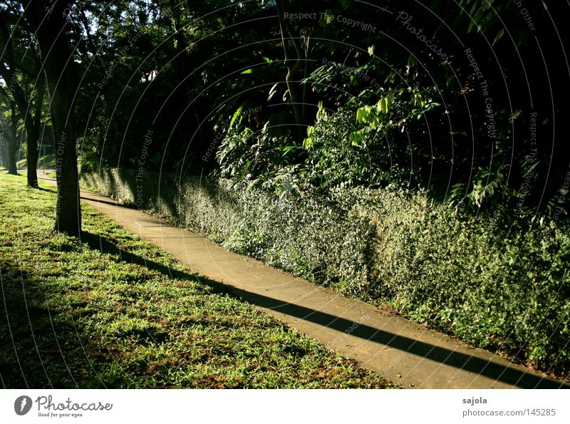 when the shadows get longer Tree Bushes Virgin forest Wall (barrier) Wall (building) Lanes & trails Concrete Green Sidewalk Ground Lawn Singapore Dusk Asia