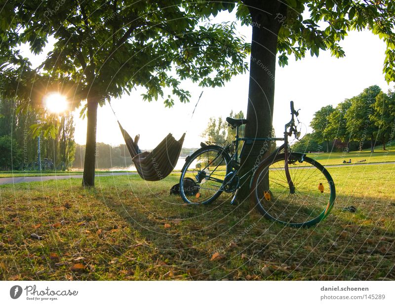 Tree Vacation & Travel Sun Summer Joy Relaxation Meadow Freedom Bicycle Leisure and hobbies Break Sunbeam Stress Dusk Closing time