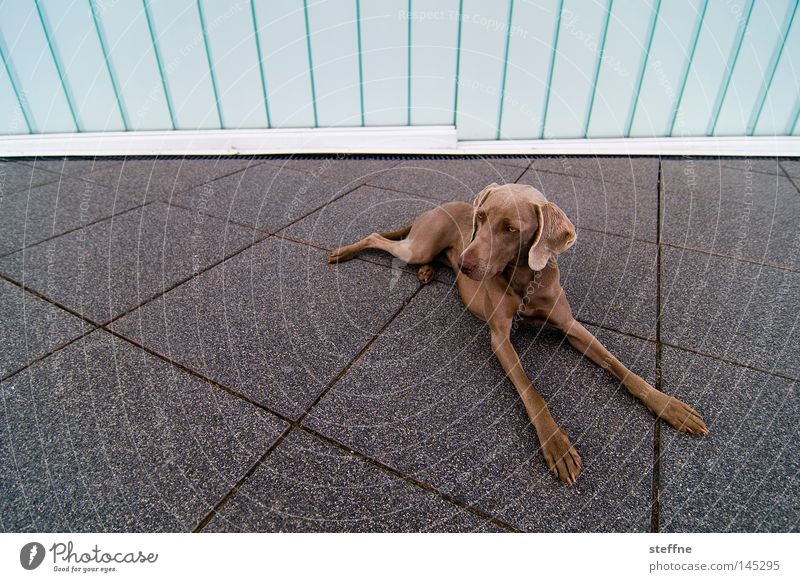 Dog Animal Places Cute Concentrate Watchfulness Mammal Snout Love of animals Caress Hound Watchdog Puppydog eyes Wauwau