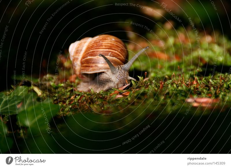 Nature Animal Moss Environmental protection Snail Feeler Woodground Slimy Gourmet Snail shell Animal protection Vineyard snail Forest animal