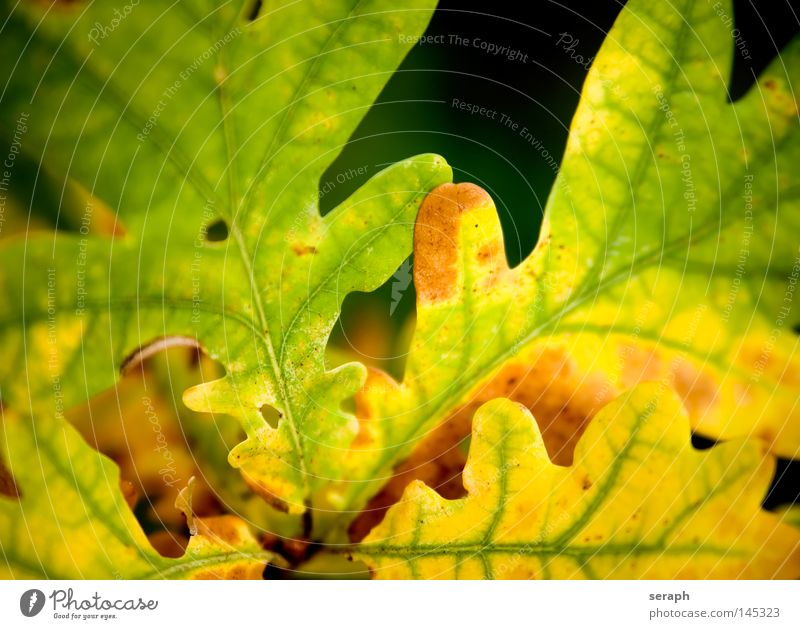Nature Tree Plant Colour Leaf Environment Yellow Autumn Brown Natural Change Round To fall Stalk Seasons Decline