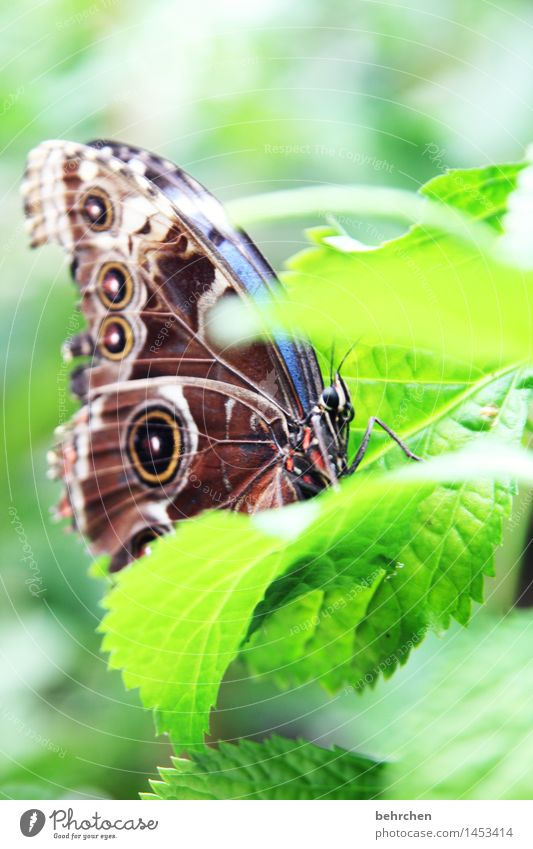 blue on green for the 3rd time Nature Plant Animal Spring Summer Beautiful weather Tree Leaf Garden Park Meadow Wild animal Butterfly Animal face Wing