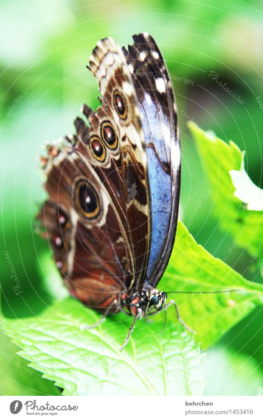 blue on green for the 2nd time Nature Plant Animal Spring Summer Beautiful weather Tree Leaf Garden Park Meadow Wild animal Butterfly Animal face Wing