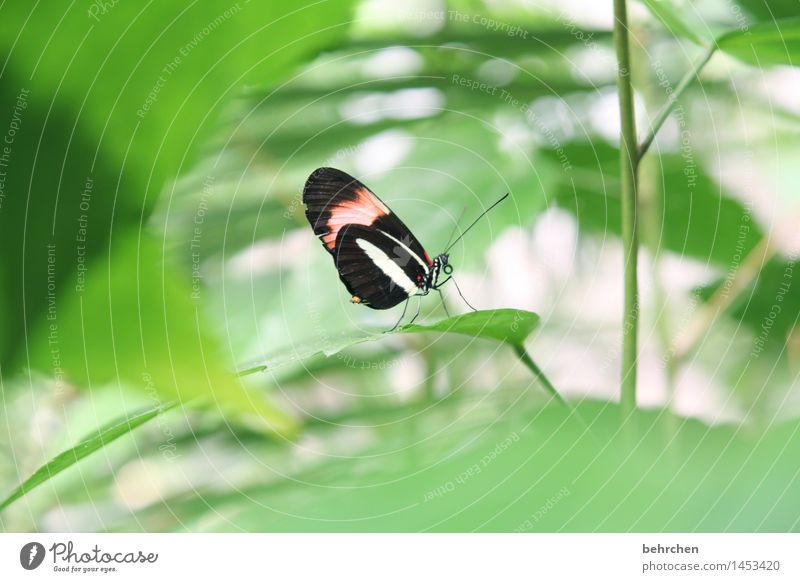 Do you see me? Nature Plant Animal Spring Summer Beautiful weather Tree Bushes Leaf Garden Park Meadow Wild animal Butterfly Wing 1 Relaxation Flying Sit