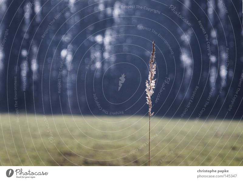 Nature Plant Loneliness Forest Autumn Grass Sadness Landscape Field Free Hope Esthetic Retro To go for a walk Simple