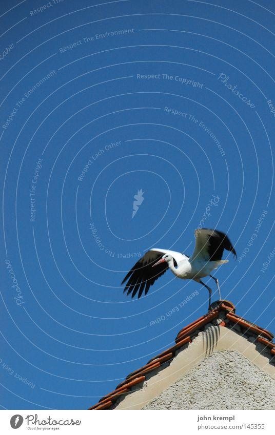 Sky Blue Vacation & Travel Bird Birthday Beginning Sweet Roof Trust Departure Offspring Stork Labor pain Honey Slovenia