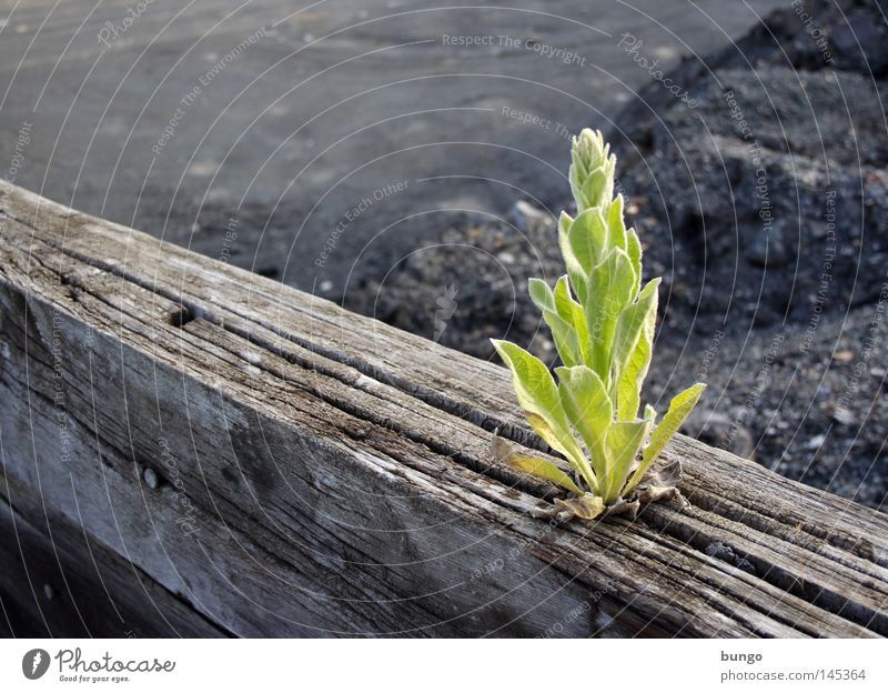 erupta Plant Green Growth Maturing time Photosynthesis Leaf Wood Joist Loneliness Force Spring Lacking Limitation Food Foraging Exceptional Unnatural Strange