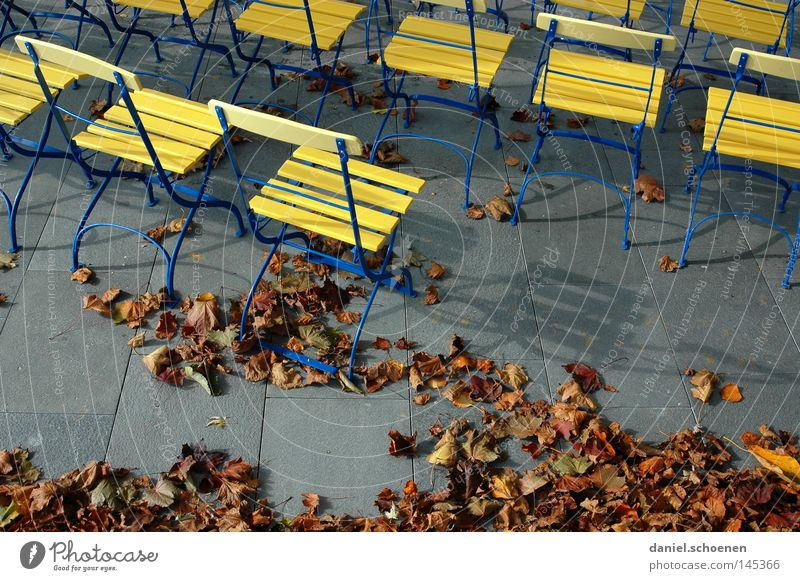open air Autumn Moody Colour Yellow Brown Leaf Chair Break Gray Traffic infrastructure Education