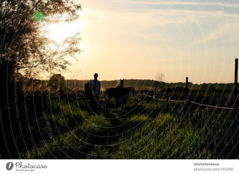 Gentlemen in natural surroundings. Sun Horse Meadow Pasture Willow tree Willow-tree Fence Horizon Physics Longing Landscape Land Feature Tree Shirt Hat Tie