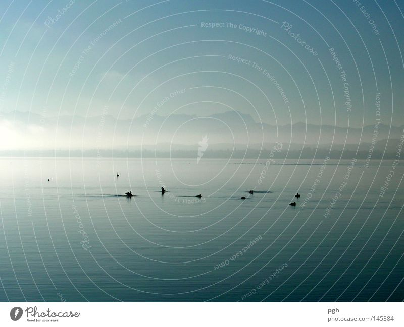 Water Sky Sun Blue Calm Mountain Moody Bird Fog Peace Duck Smoothness Bavaria Peaceful Lake Starnberg