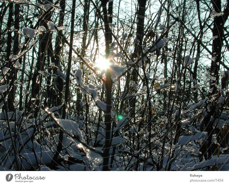 Sun Snow Ice Glittering Twig