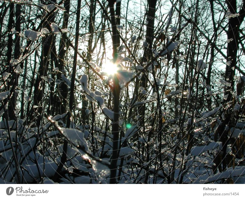 winter sun Light Snow Ice Sun Glittering Twig