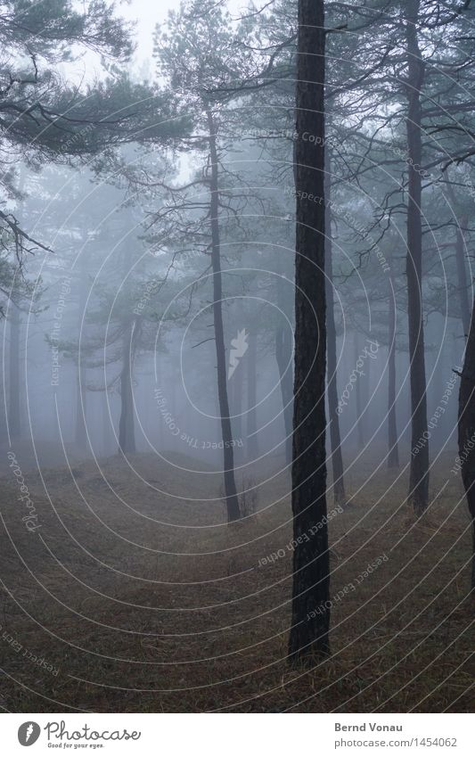 trunk Environment Nature Landscape Plant Tree Grass Forest Hill Emotions Moody Calm Gray Brown Green Pine Fog Haze Autumn To go for a walk Dreary Colour photo