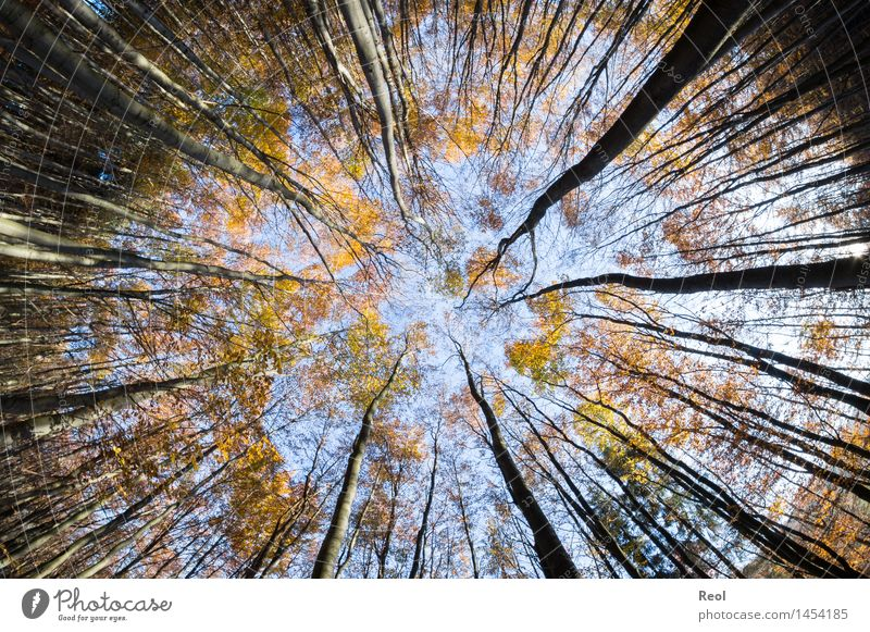 To the middle Nature Landscape Sky Cloudless sky Autumn Beautiful weather Plant Tree Leaf Wild plant Leaf canopy Tree trunk Twigs and branches Branch Forest