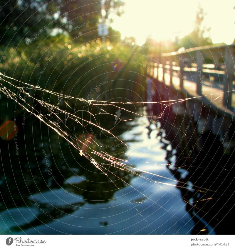 Spiders at the lake Contentment Relaxation Freedom Summer vacation Nature Water Lake Net Moody Safety (feeling of) Wisdom Eternity Peace Footbridge Common Reed