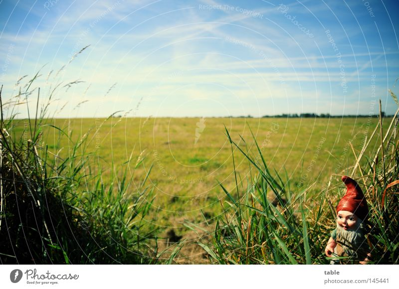 Sky Blue Green White Summer Clouds Meadow Emotions Grass Germany Horizon Garden Gastronomy Garden plot Dwarf Cliche