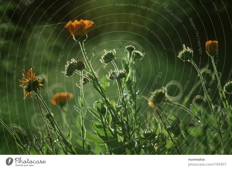 Nature Green Beautiful Flower Colour Autumn Emotions Blossom Earth Wild Fresh Drops of water Ground Simple Protection