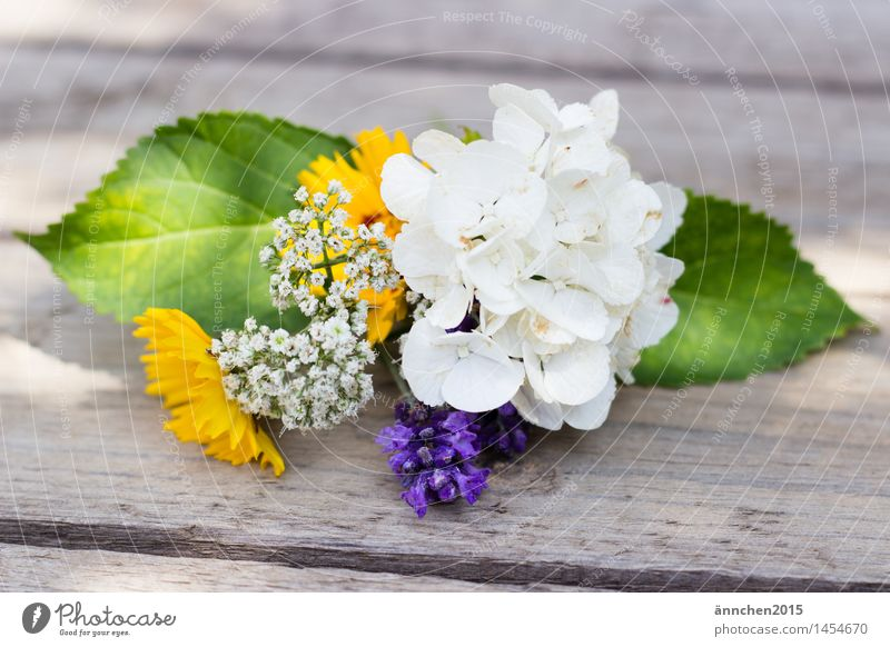 Nature Plant Green Beautiful Summer White Flower Relaxation Leaf Calm Yellow Blossom Spring Happy Garden Romance
