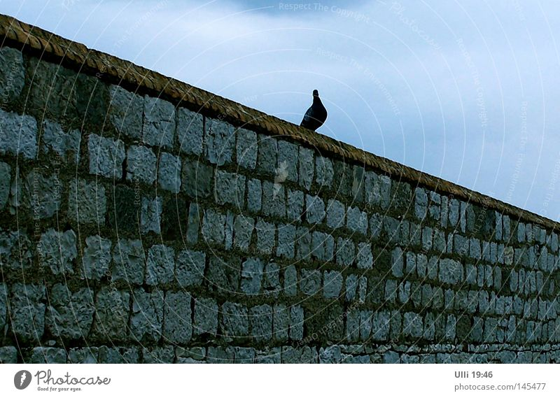 Sky Animal Wall (building) Wall (barrier) Stone Bird Diagonal Pigeon Stone wall Building line Bright background
