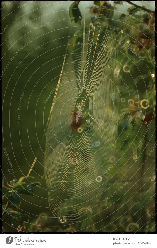 Nature Green Animal Autumn Death Moody Glittering Fear Fly Authentic Drops of water Circle Sign Drop Net Muddled