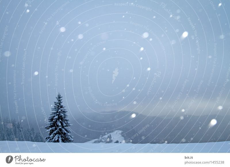 Nature Christmas & Advent Winter Mountain Environment Snow Moody Snowfall Ice Frost Christmas tree Santa Claus Winter vacation Winter mood Winter's day