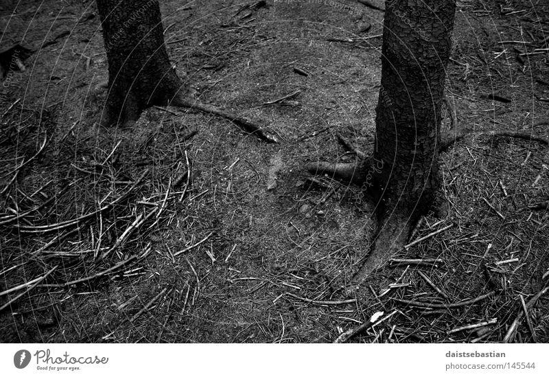 skogdød Woodground Death Tree Tree bark Branch Root