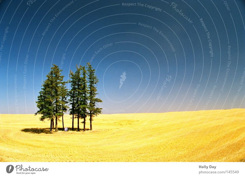 Field, forest and sky Tree Pol-filter Blue Sky Beautiful weather Harvest Yellow Golden yellow Green Vertical Pattern Horizon Shadow Summer Wheatfield