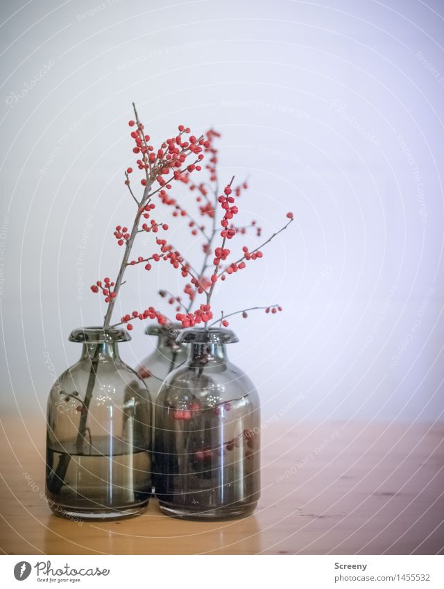 Three Vase Decoration Bushes Berry bushes Wood Glass Esthetic Gray Red Still Life Colour photo Interior shot Deserted Artificial light Shallow depth of field
