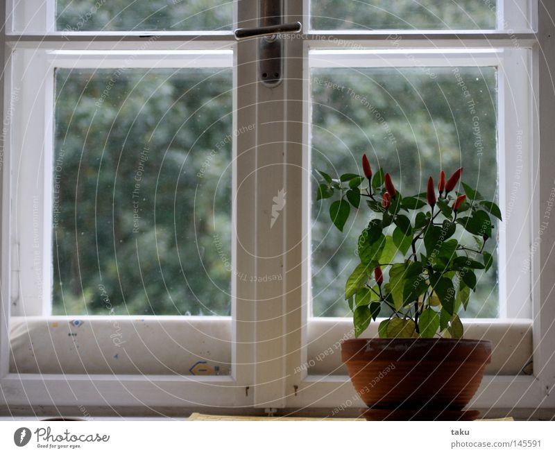 Green Red Window Glass Growth Kitchen Violet Harvest Cast Pane Window board Flowerpot Dormer Clay pot