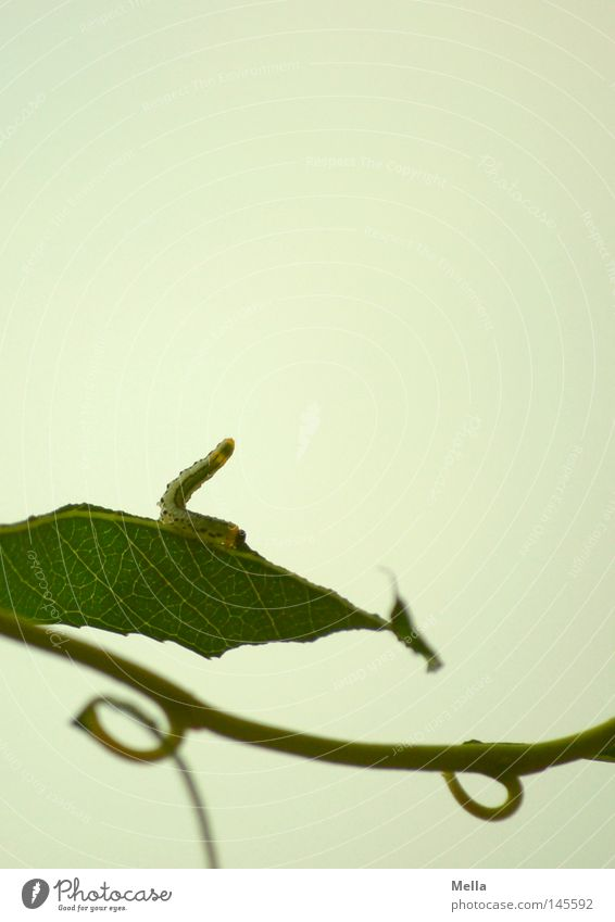 Green Summer Leaf Nutrition Above Gray Small Tall Circle Transience Upward To feed Flexible Bend Branchage Stretching