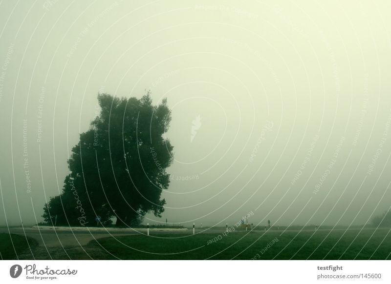 Indian buzzer Autumn Fog Dark Gray Tree In transit Green September Traffic circle Street hebstphoto autumn picture