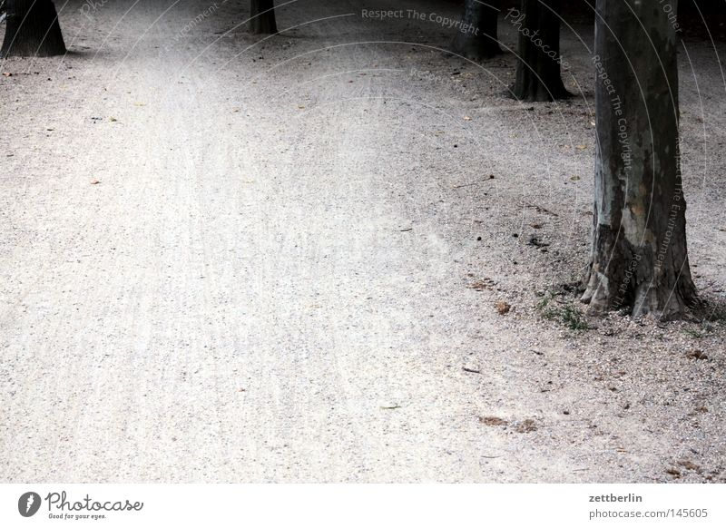 Tree Lanes & trails Park Sand Hiking Earth Derelict Footpath Tree trunk Gravel Jogging Pebble Habitat Jogger Cycle path Berlin zoo