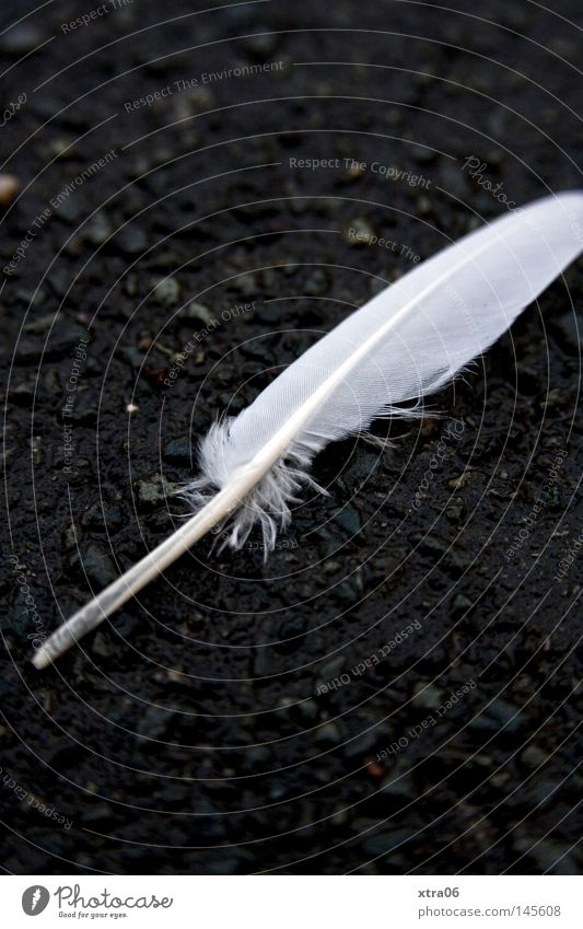 the feather Feather Ground Asphalt White Contrast Easy Bird Delicate Smooth