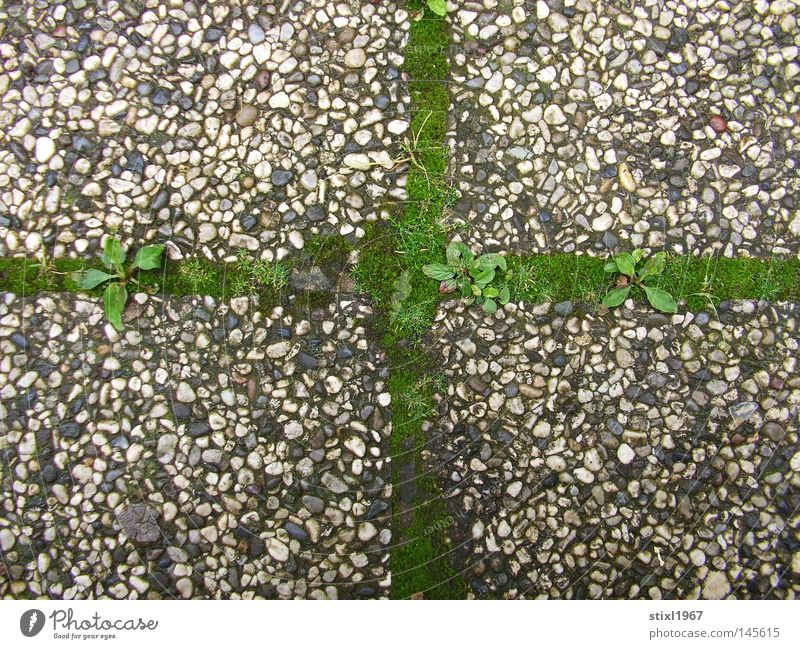 moss cross Moss Grass Green Crucifix Christian cross Concrete Religion and faith Catholicism Gray Pebble Sidewalk Things