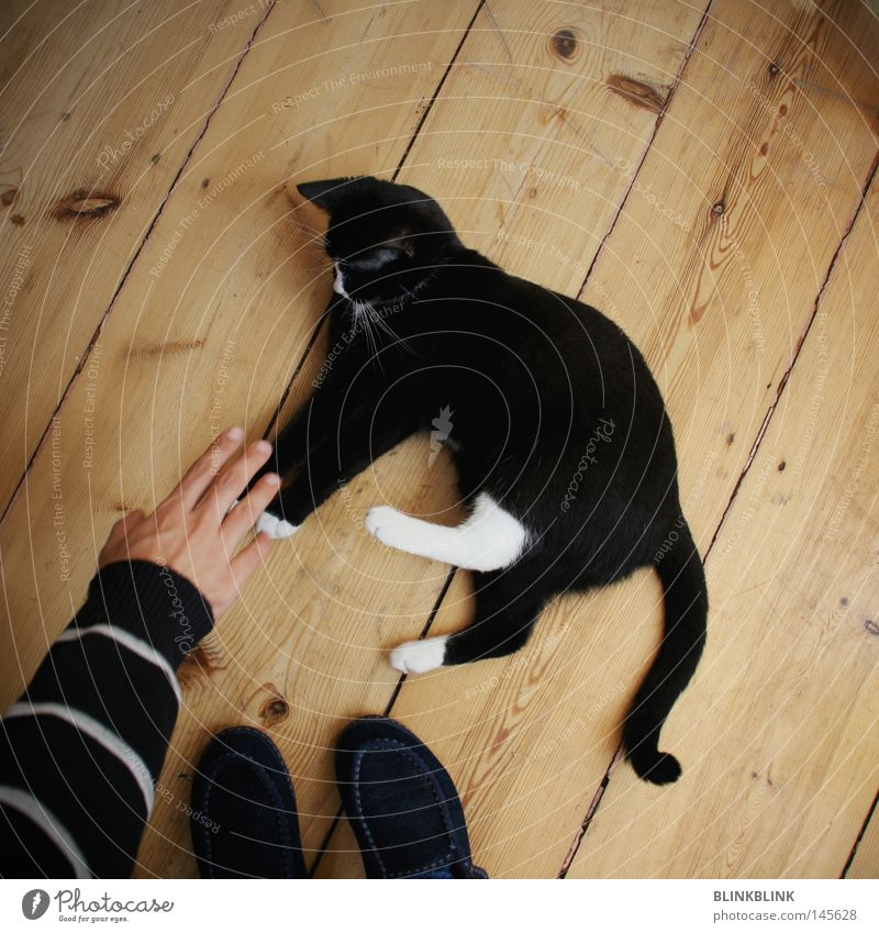Hand White Joy Black Animal Playing Cat Feet Flat (apartment) Animal foot Lie Sweet Floor covering Stripe Ear Ear
