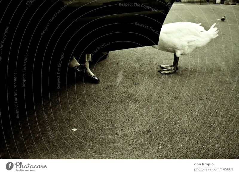 Street Car Bird Animal foot Car door Motor vehicle Asphalt Trust Lady Analog Human being Black & white photo Feeding Ireland
