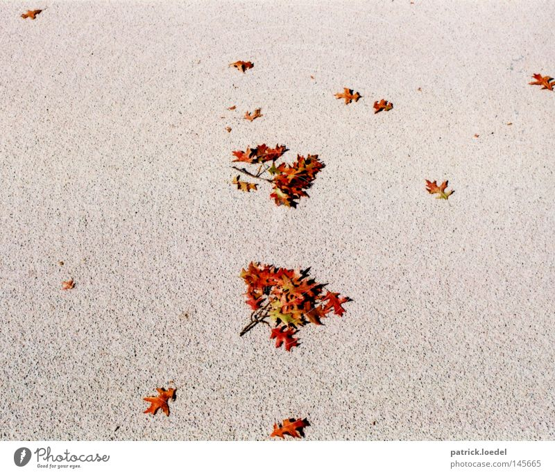 [HH08.3] Autumn scattering Leaf To fall Asphalt Ground Stone Branchage Twigs and branches Death The Grim Reaper Grief Indian Summer September October Red Gray