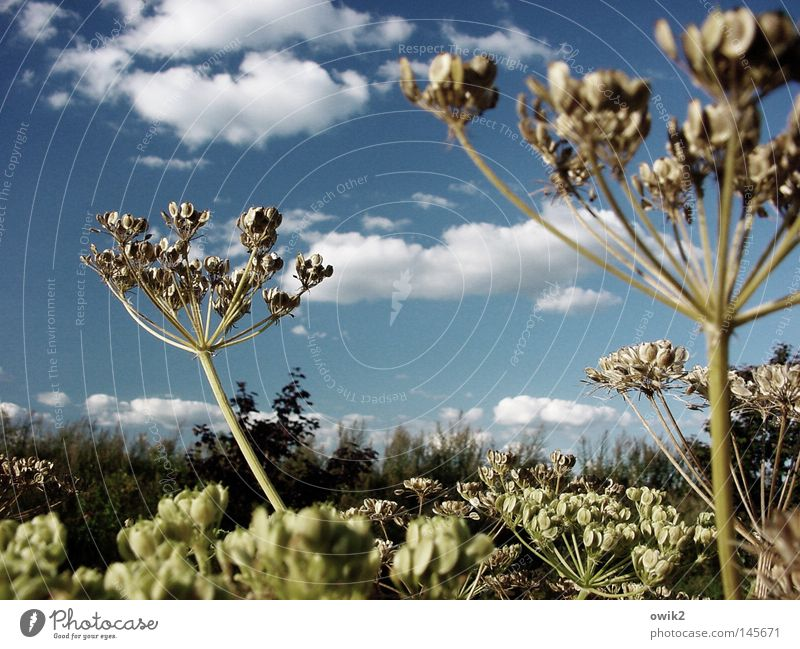 Late summer Beautiful Environment Nature Landscape Plant Animal Air Sky Clouds Horizon Autumn Climate Beautiful weather Wild plant Meadow Movement To swing